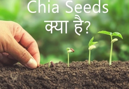 Chia seeds meaning in Hindi – Chia seeds का मतलब?
